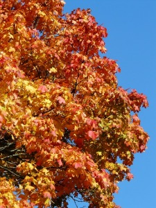autumn-tree-61795_640