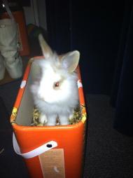 Een konijn doet het ook altijd goed als inspiratiebron
