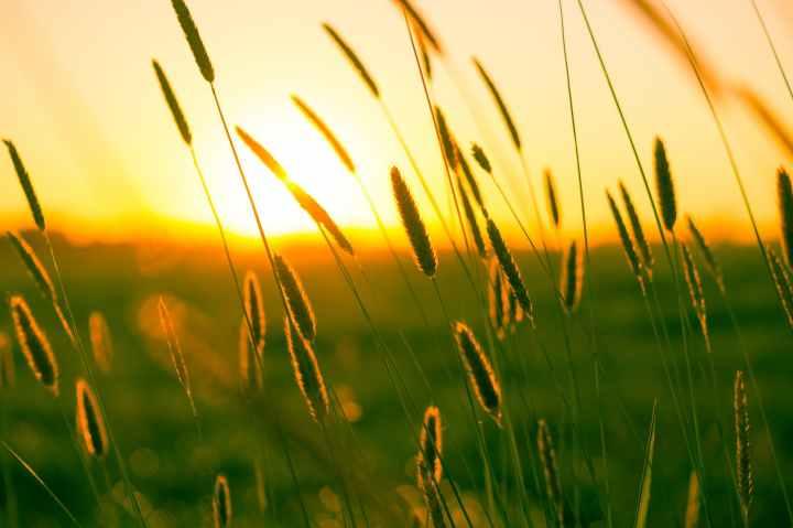 summer-sun-yellow-photography.jpg